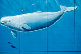 wall painting stock photography | Alaska, Anchorage, Whale mural, image id 5-650-771