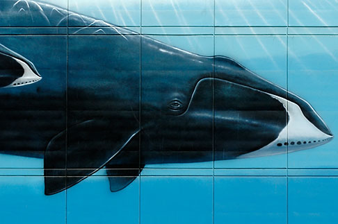 image 5-650-774 Alaska, Anchorage, Whale mural