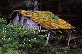 isolation stock photography | Alaska, Southeast, Abandoned cabin, image id 8-335-1
