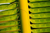 west stock photography | Antigua, Palm frond, image id 4-600-4