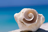 sea stock photography | Antigua, Spiral shell, image id 4-600-55