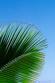 blue background stock photography | Antigua, Palm frond, image id 4-600-84