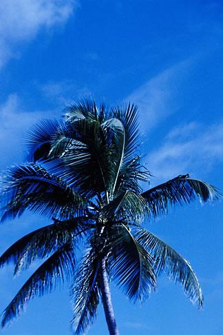 image 4-601-60 Antigua, Palm