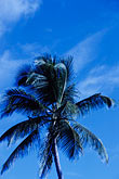 light blue stock photography | Antigua, Palm, image id 4-601-60