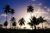 black stock photography | Antigua, Jolly Harbor, Palms and beach at sunset, image id 4-603-24