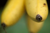 bunch stock photography | Fruit, Yellow Bananas, image id 4-603-4