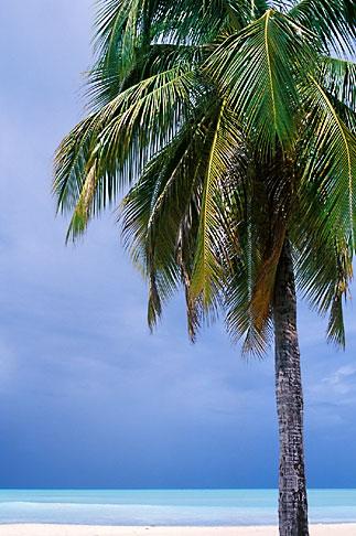 image 4-603-76 Antigua, Palm and beach