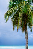 blue stock photography | Antigua, Palm and beach, image id 4-603-76