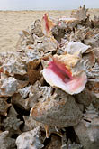 pink stock photography | Antigua, Shells, Carlisle Bay, image id 4-603-86