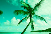 green stock photography | Antigua, Palm and beach, image id 4-605-31