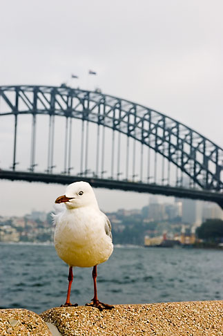 image 5-600-1409 Australia, Sydney, Sydney Harbour Bridge