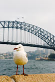 alone stock photography | Australia, Sydney, Sydney Harbour Bridge, image id 5-600-1409