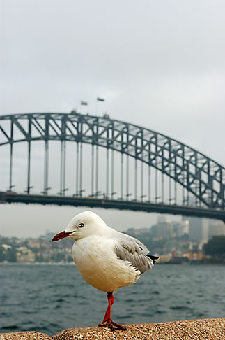 image 5-600-1411 Australia, Sydney, Sydney Harbor Bridge