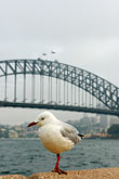 route stock photography | Australia, Sydney, Sydney Harbor Bridge, image id 5-600-1411