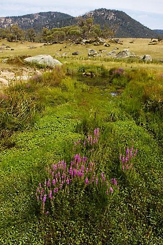 image 5-600-1624 Australia, Australian Capital Territory, Namadgi National Park, Yankee Hat