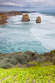 shoreline wildflowers stock photography | Australia, Victoria, Twelve Apostles, Port Campbell National Park, image id 5-600-2263