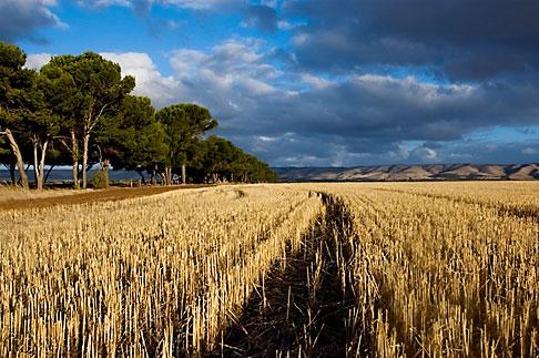 image 5-600-2429 Australia, South Australia, McLaren Vale, Hay field