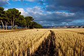 cloudy stock photography | Australia, South Australia, McLaren Vale, Hay field, image id 5-600-2429