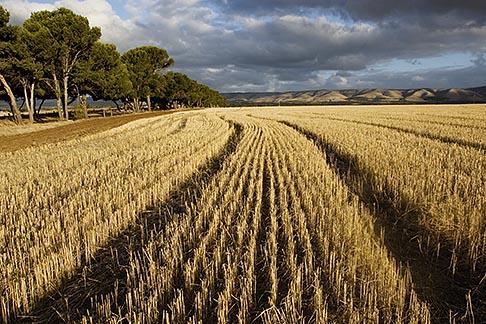 image 5-600-2431 Australia, South Australia, McLaren Vale, Hay field