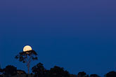 dark blue stock photography | Australia, New South Wales, Moonrise, image id 5-600-8089