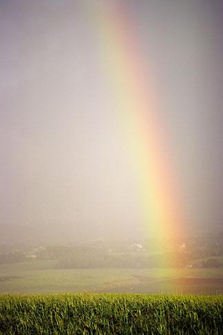 image 0-206-65 Barbados, Rainbow and sugar cane field