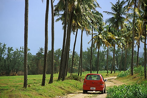 image 0-208-30 Barbados, St Andrew, Road to Morgan Lewis Beach