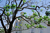 tree stock photography | Barbados, St. Peter, St. Nicholas Abbey, image id 3-387-44