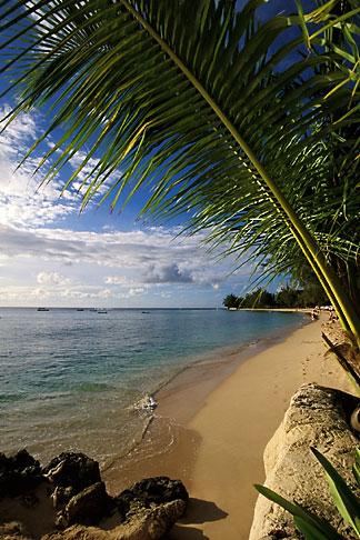 image 3-388-51 Barbados, Holetown, Coral Reef Club, beach
