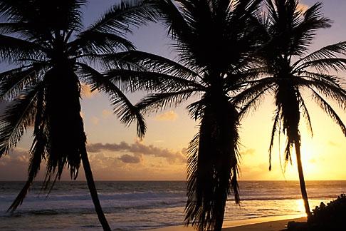 image 3-483-45 Barbados, Bathsheba, Beach