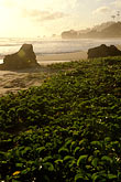 early morning mist stock photography | Barbados, Bathsheba, Beach, image id 3-483-56