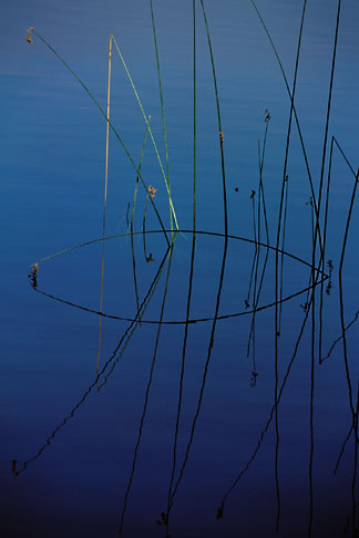 image 0-429-16 California, Contra Costa, Briones Reservoir, Tule reeds