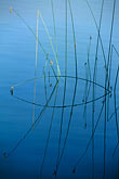 straight line stock photography | California, Contra Costa, Briones Reservoir, Tule reeds, image id 0-429-16