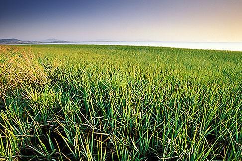 image 1-400-4 California, East Bay Parks, San Pablo Bay shoreline, Point Pinole Regional Park