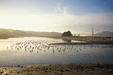 suspension bridge stock photography | California, San Francisco, Tidal marsh, Crissy Field, GGNRA, image id 1-60-1