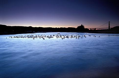 image 1-70-43 California, San Francisco, Tidal marsh at sunset with bridge, Crissy Field