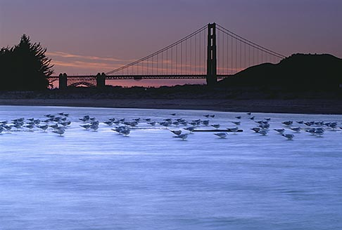 1-70-49 stock photo of California, San Francisco, Tidal marsh at sunset with bridge, Crissy Field