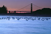 blue water stock photography | California, San Francisco, Tidal marsh at sunset with bridge, Crissy Field, image id 1-70-49