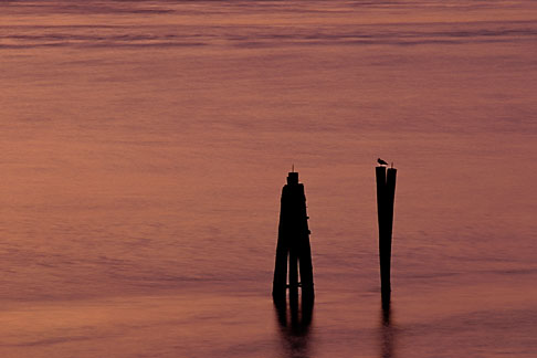 image 2-188-21 California, San Francisco Bay, Gull on pilings at dusk, Point Molate