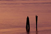 at dusk stock photography | California, San Francisco Bay, Gull on pilings at dusk, Point Molate, image id 2-188-21