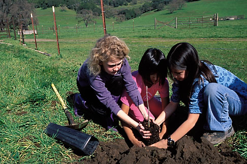 image 2-216-30 California, Marin County, McIsaac Ranch, STRAW program creek restoration