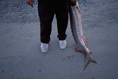 image 2-221-45 California, San Francisco Bay, Sturgeon Fishing, San Pablo Bay