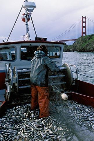image 2-232-97 California, San Francisco Bay, Herring Boat near Golden Gate Bridge