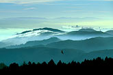 evening stock photography | California, Marin County, San Francisco and hills from Mount Tamalpais, image id 2-236-11