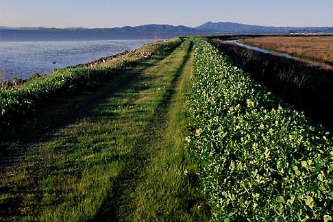 image 2-350-20 California, San Francisco Bay, San Pablo Nat Wildlife Refuge, Lower Tubbs Island levee