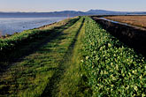 horizontal stock photography | California, San Francisco Bay, San Pablo Nat. Wildlife Refuge, Lower Tubbs Island levee, image id 2-350-20