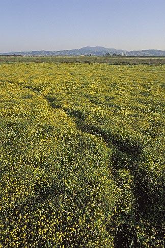 image 2-401-3 California, Solano County, Collinsville, Montezuma Wetlands