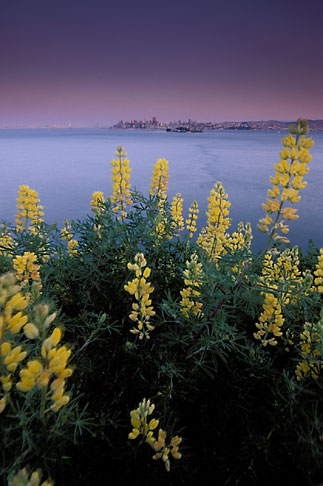 image 2-410-24 California, San Francisco Bay, Angel Island State Park