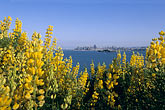 yellow stock photography | California, San Francisco Bay, Angel Island State Park, image id 2-410-3