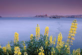 lupine stock photography | California, San Francisco Bay, Angel Island State Park, image id 2-410-925