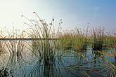 water stock photography | California, Delta, Tule reeds, image id 2-590-1